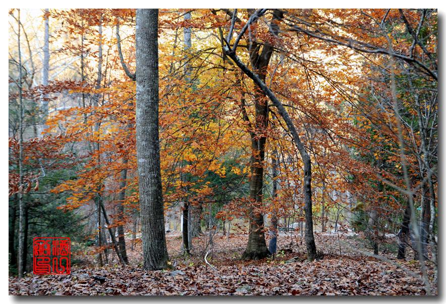 《原创摄影》:弗吉尼亚的天然桥_图1-16