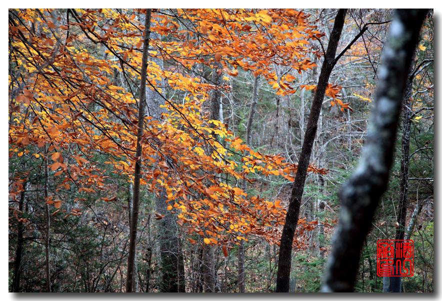 《原创摄影》:弗吉尼亚的天然桥_图1-17