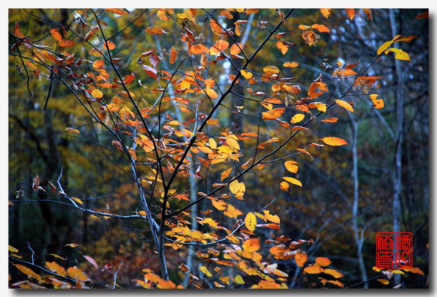 《原创摄影》:弗吉尼亚的天然桥_图1-18