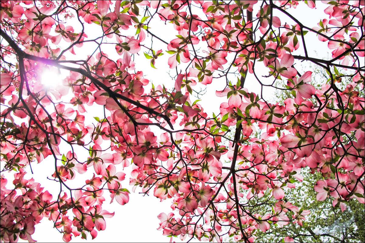 街头花树(G12)_图1-1