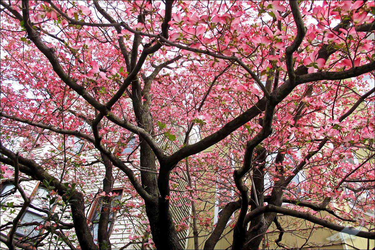 街头花树(G12)_图1-3
