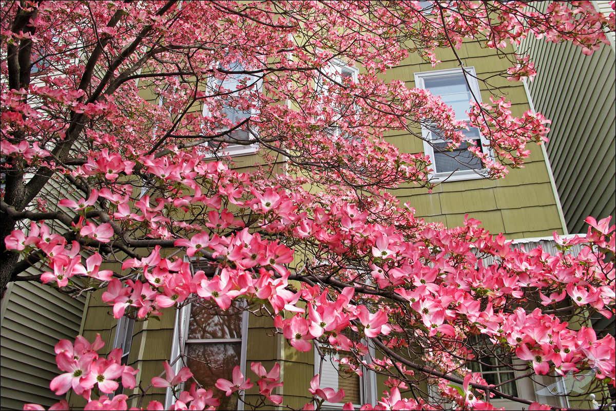 街头花树(G12)_图1-4