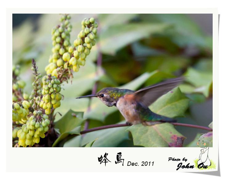 蜂鸟_图1-6