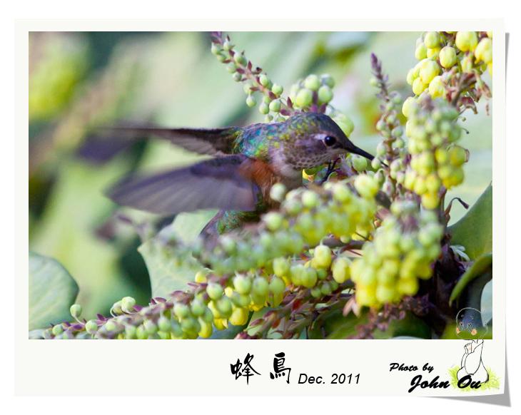 蜂鸟_图1-7