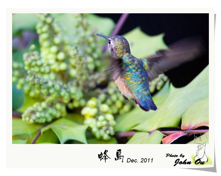 蜂鸟_图1-12