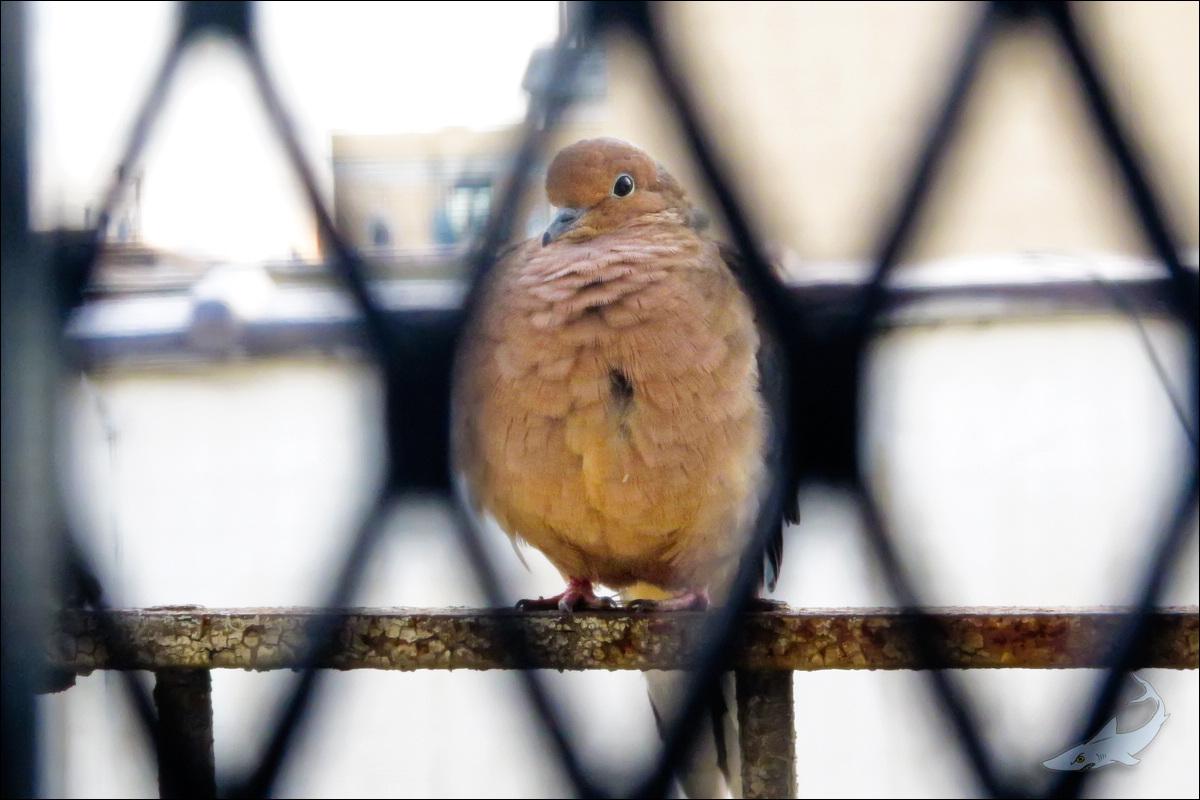 窗外有鸟拍(G12)_图1-1