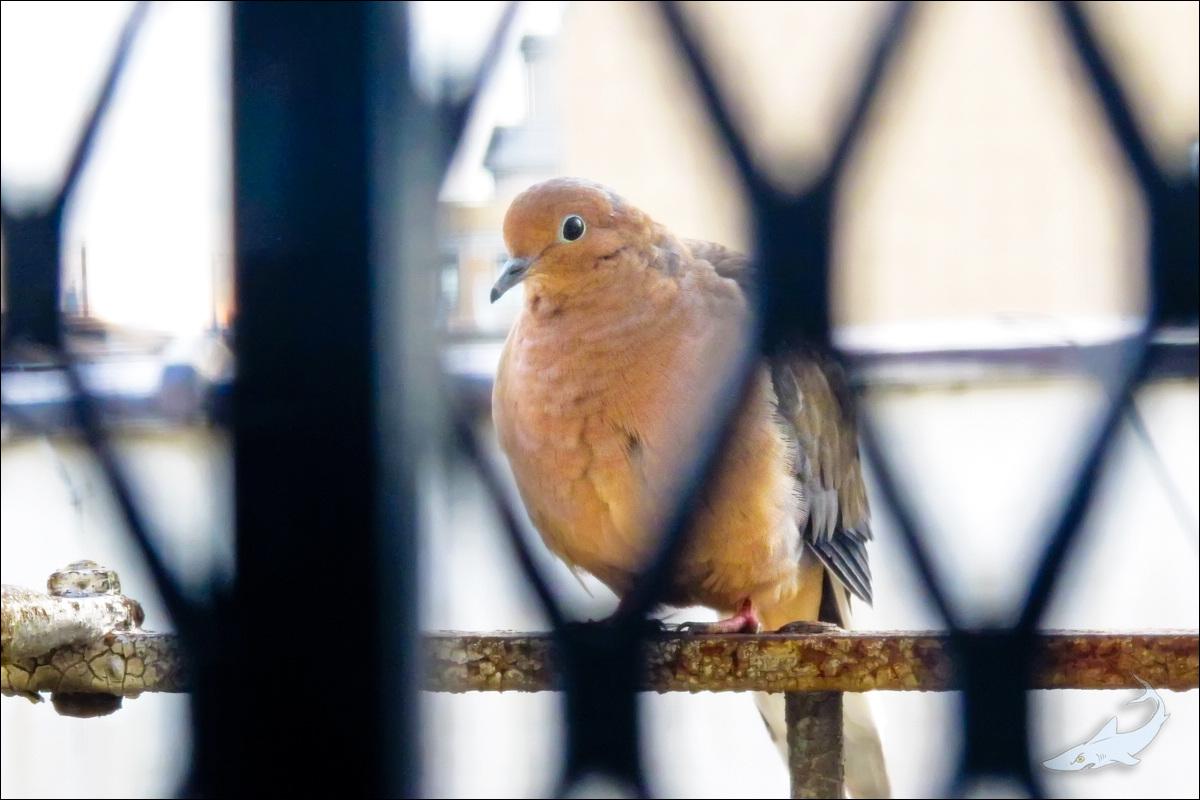 窗外有鸟拍(G12)_图1-3