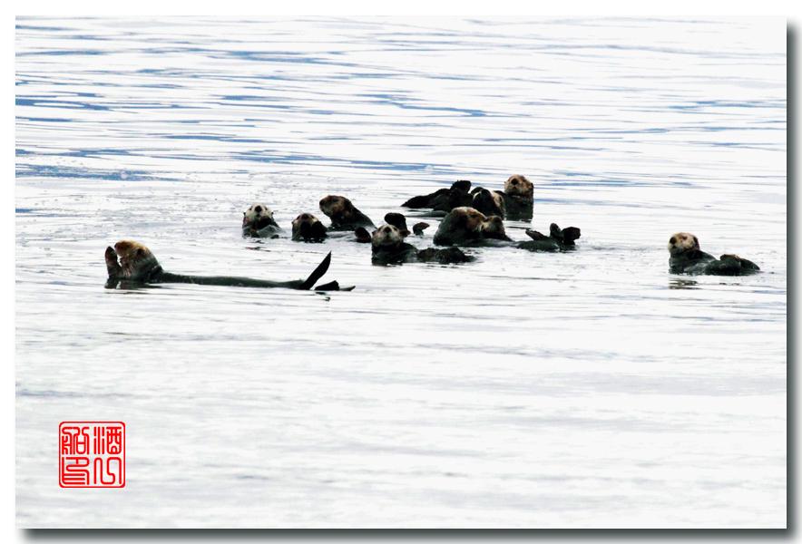 《原创摄影》:万年寒冰的纹理:梦中的阿拉斯加之十二_图1-16