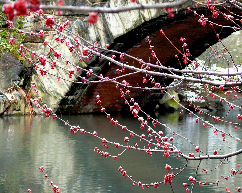 《爱摄影》新年快乐_图1-5