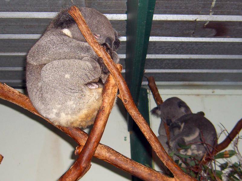 悉尼小动物(2)_图1-2