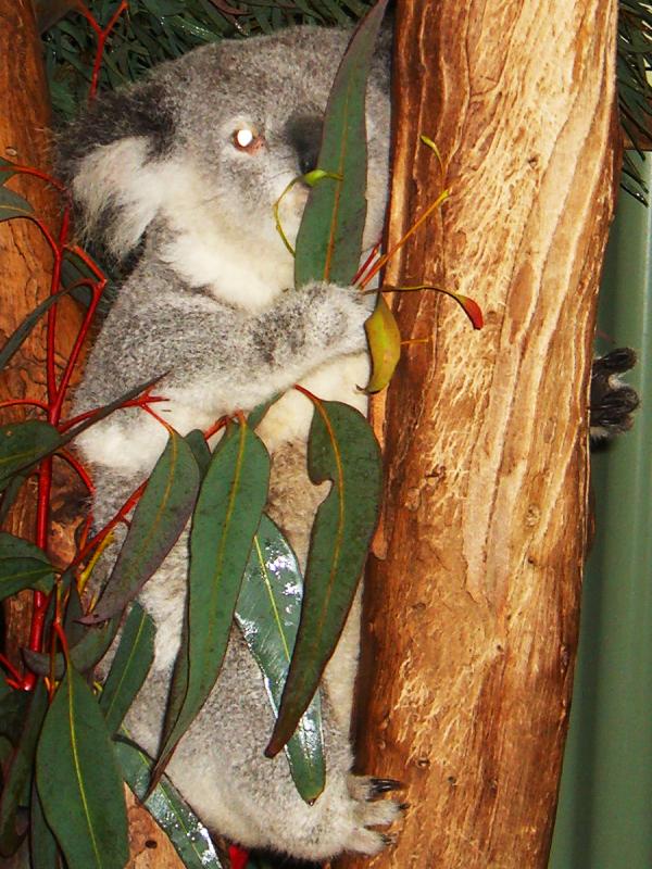 悉尼小动物(2)_图1-4