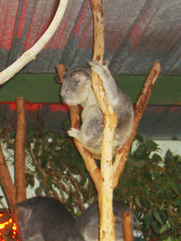 悉尼小动物(2)_图1-5