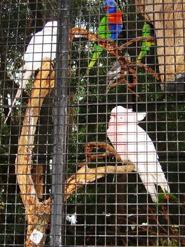 悉尼小动物(2)_图1-7