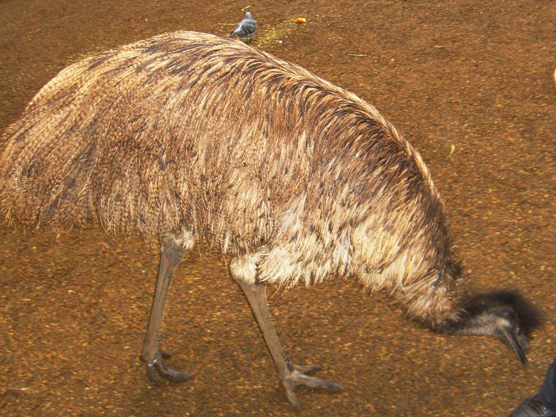 悉尼小动物(2)_图1-12