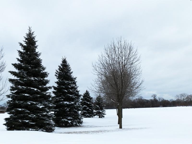 诗情画意01:雪染的风采_图1-4