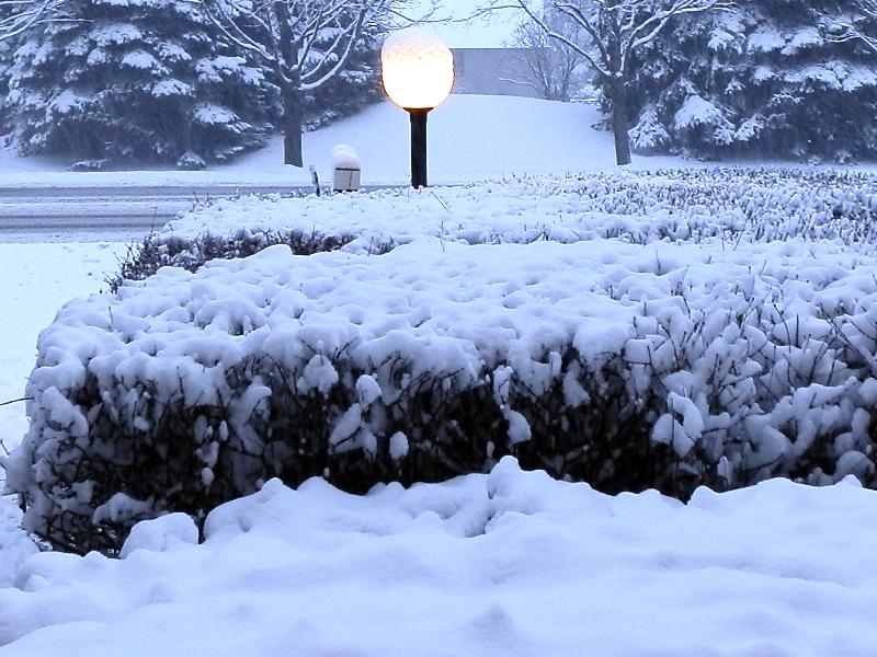 诗情画意01:雪染的风采_图1-13