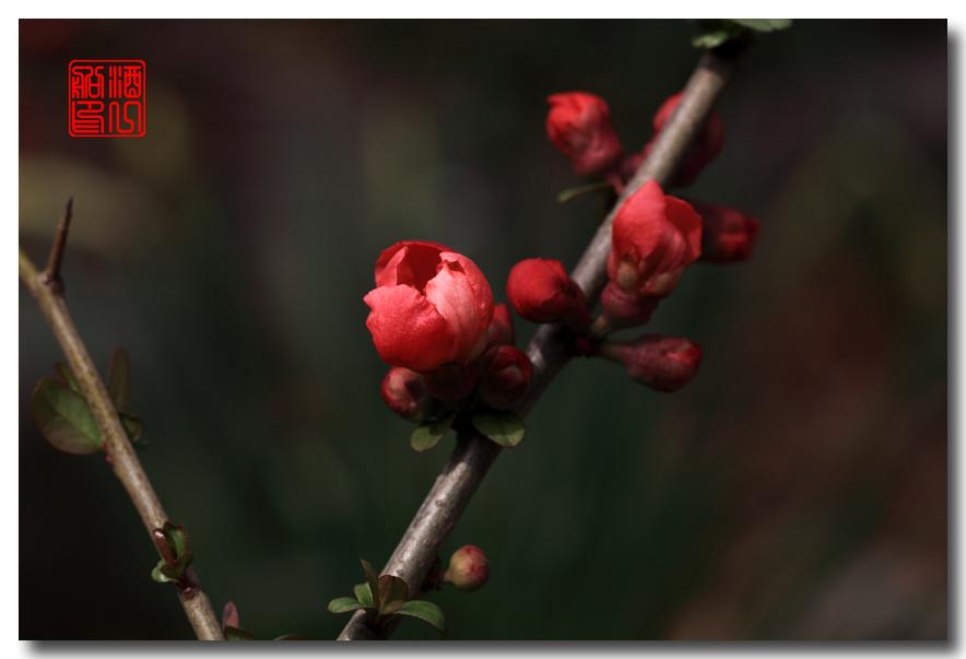 《原创摄影》:梅魂梅语梅商量_图1-3