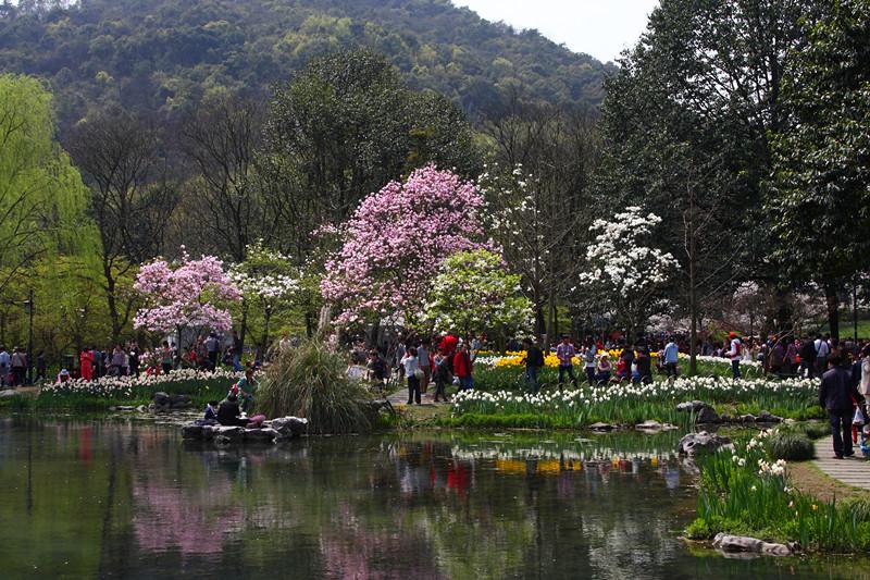 春日里的杭州太子湾美景_图1-8