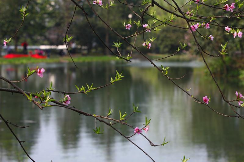 春日里的杭州太子湾美景_图1-12