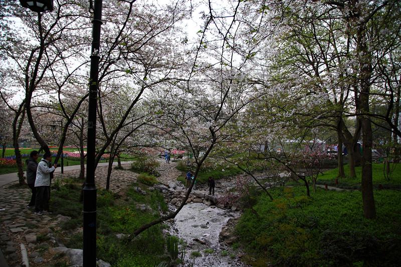 春日里的杭州太子湾美景_图1-13