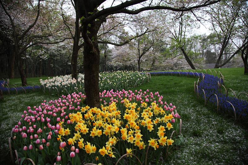 春日里的杭州太子湾美景_图1-33