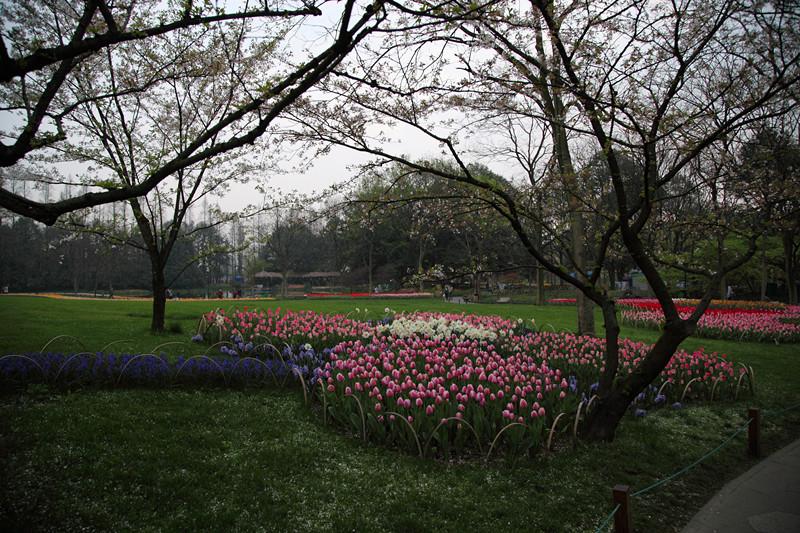 春日里的杭州太子湾美景_图1-14