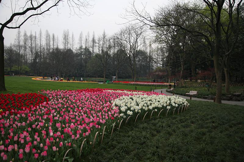 春日里的杭州太子湾美景_图1-17