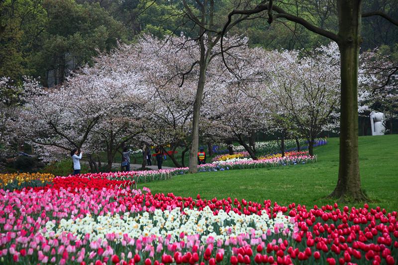 春日里的杭州太子湾美景_图1-19