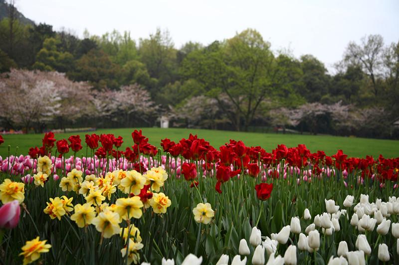 春日里的杭州太子湾美景_图1-20