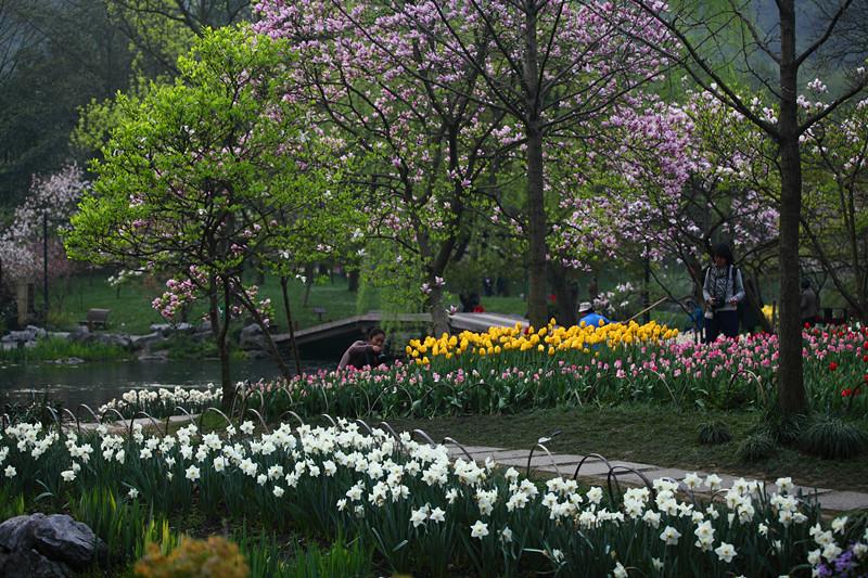 春日里的杭州太子湾美景_图1-26