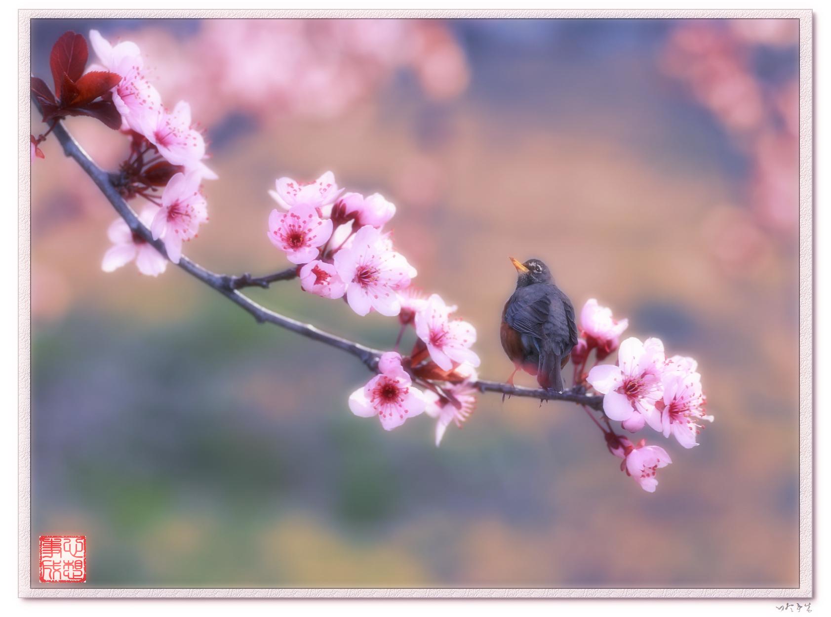 【心想事成】鸟语花香-PS合成的原创片_图1-8