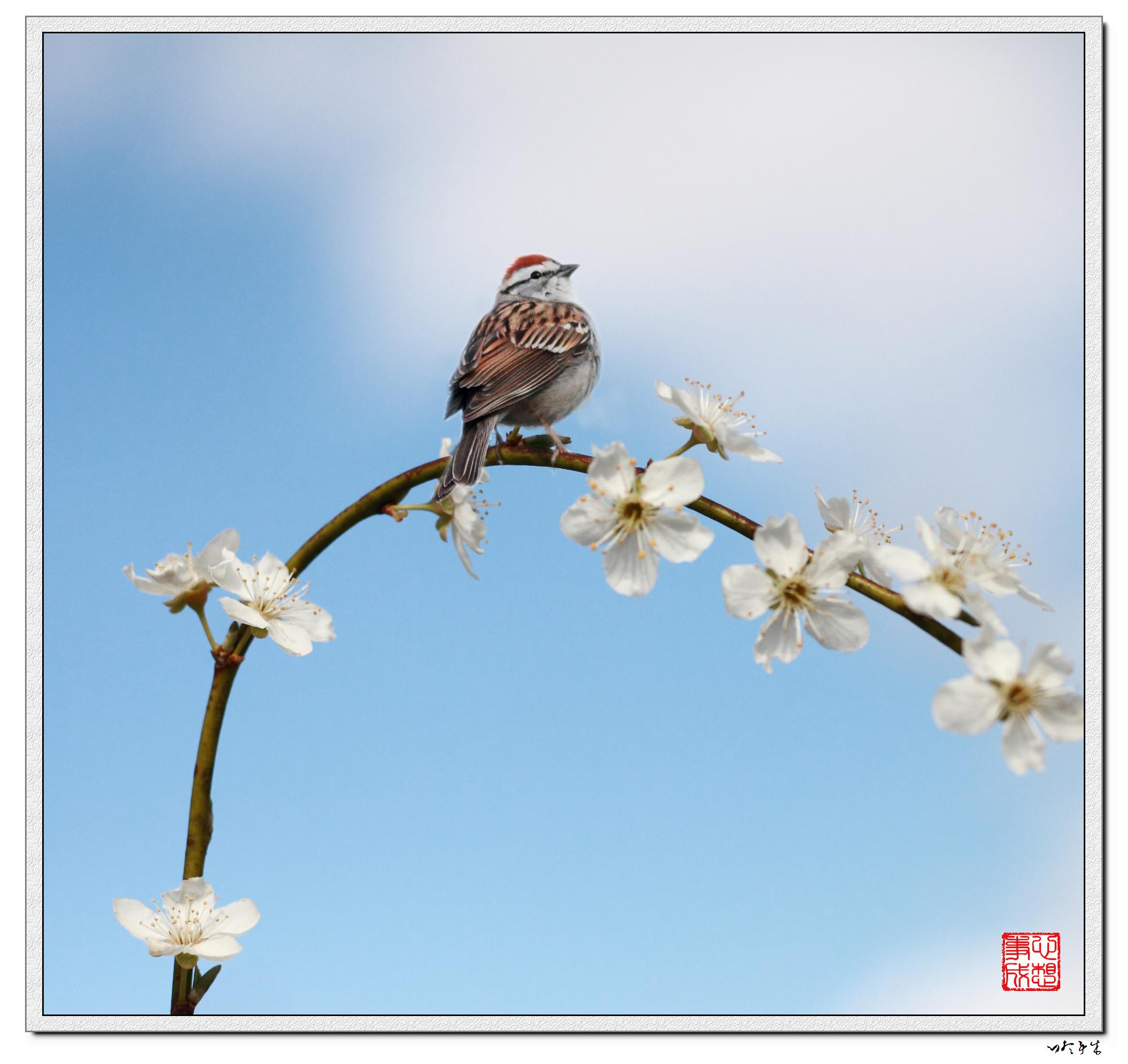 【心想事成】鸟语花香-PS合成的原创片_图1-3