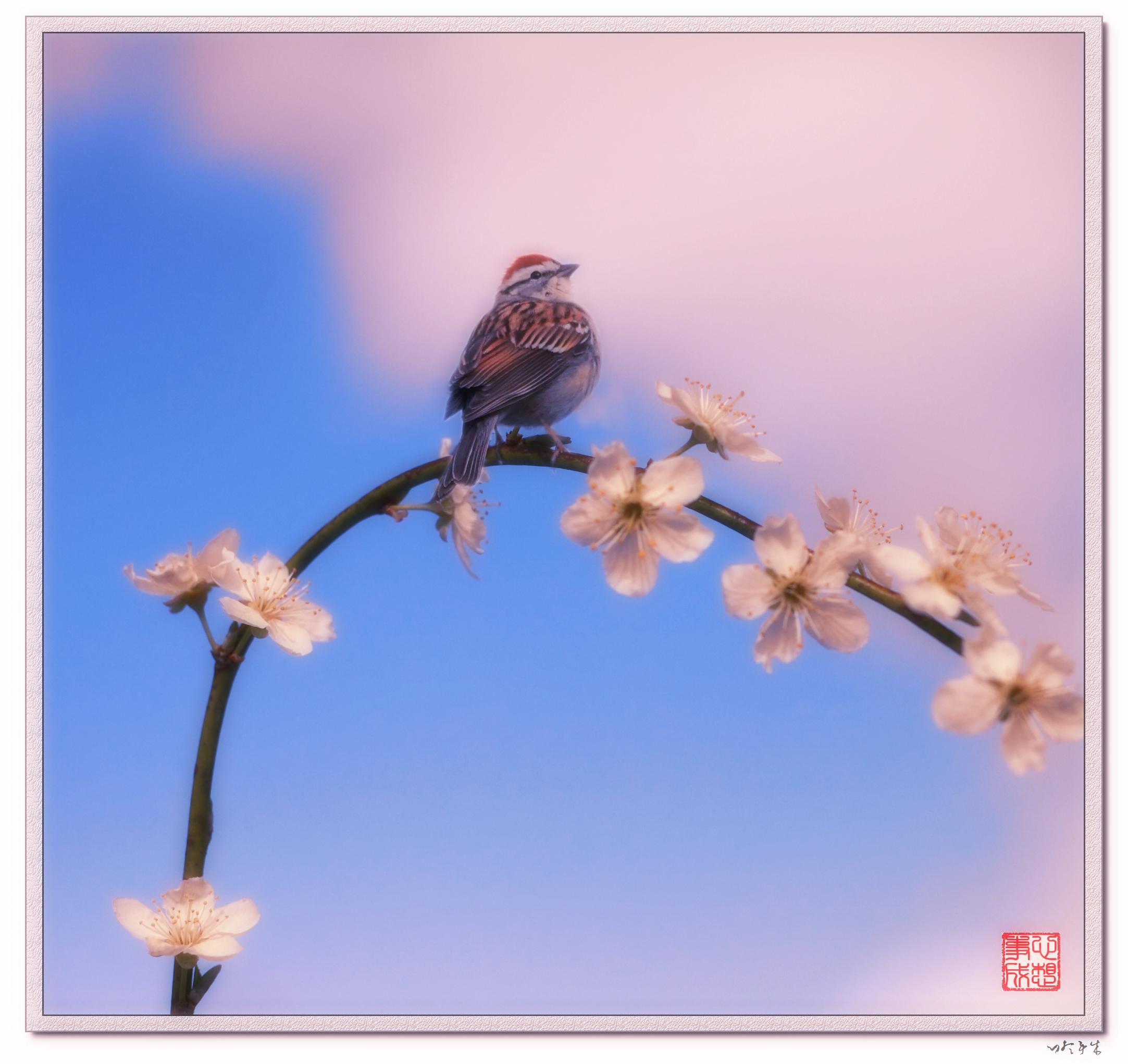 【心想事成】鸟语花香-PS合成的原创片_图1-6