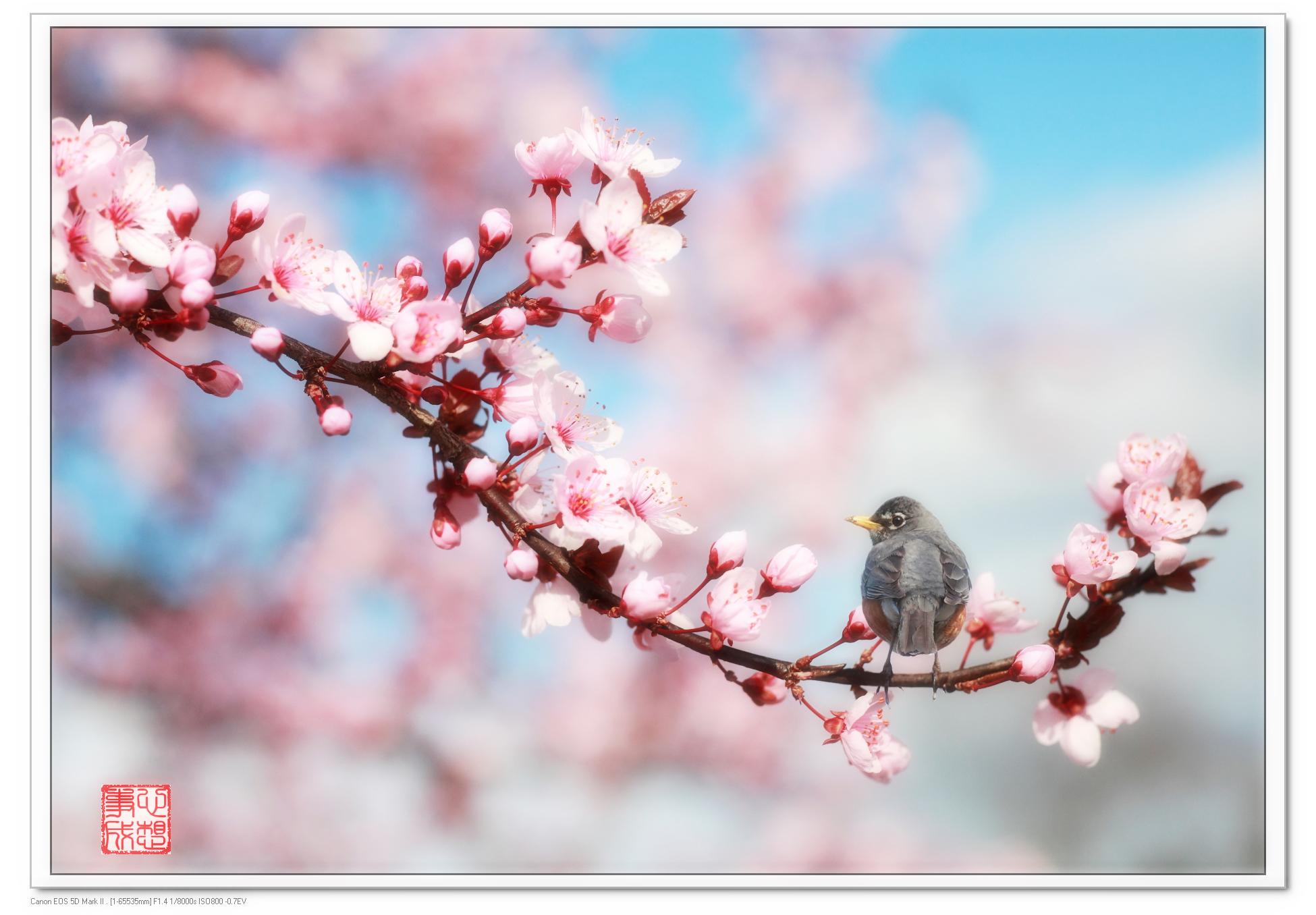 【心想事成】鸟语花香-PS合成的原创片_图1-1