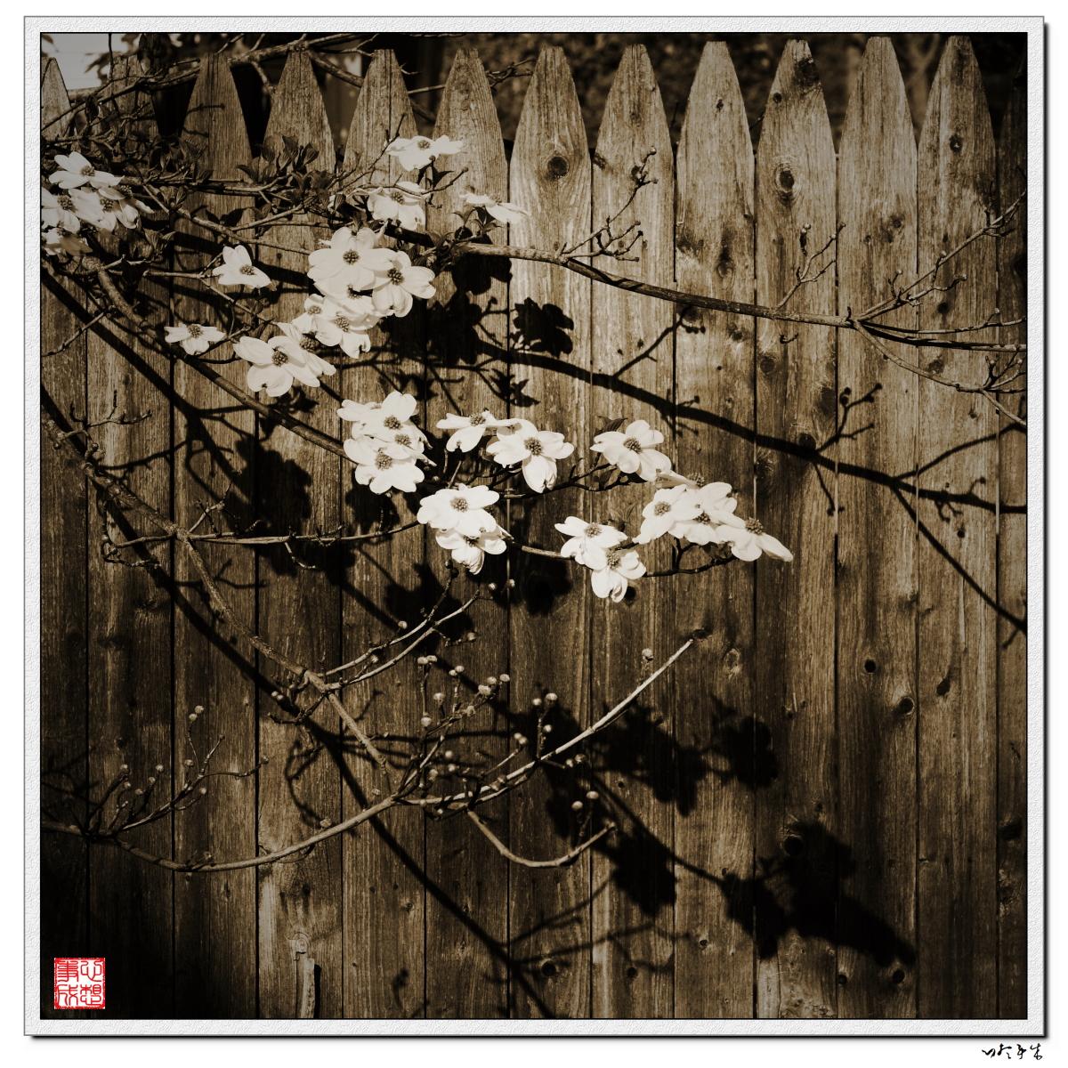 【心想事成】走进春天,感受春意_图1-12