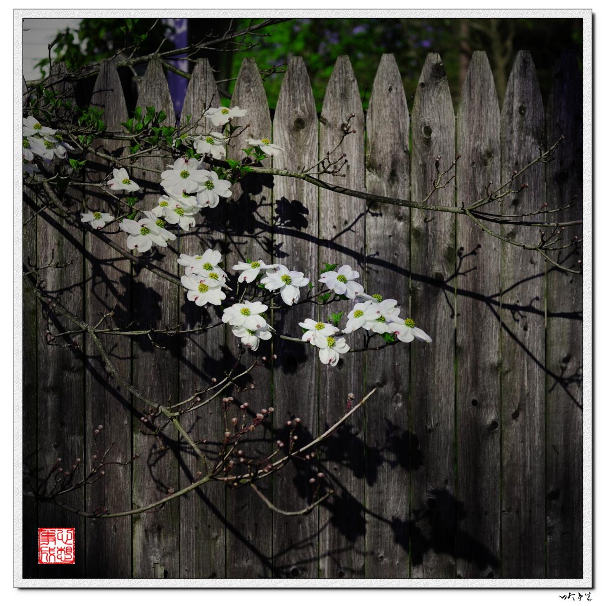 【心想事成】走进春天,感受春意_图1-11