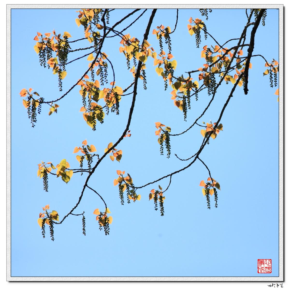 【心想事成】走进春天,感受春意_图1-6