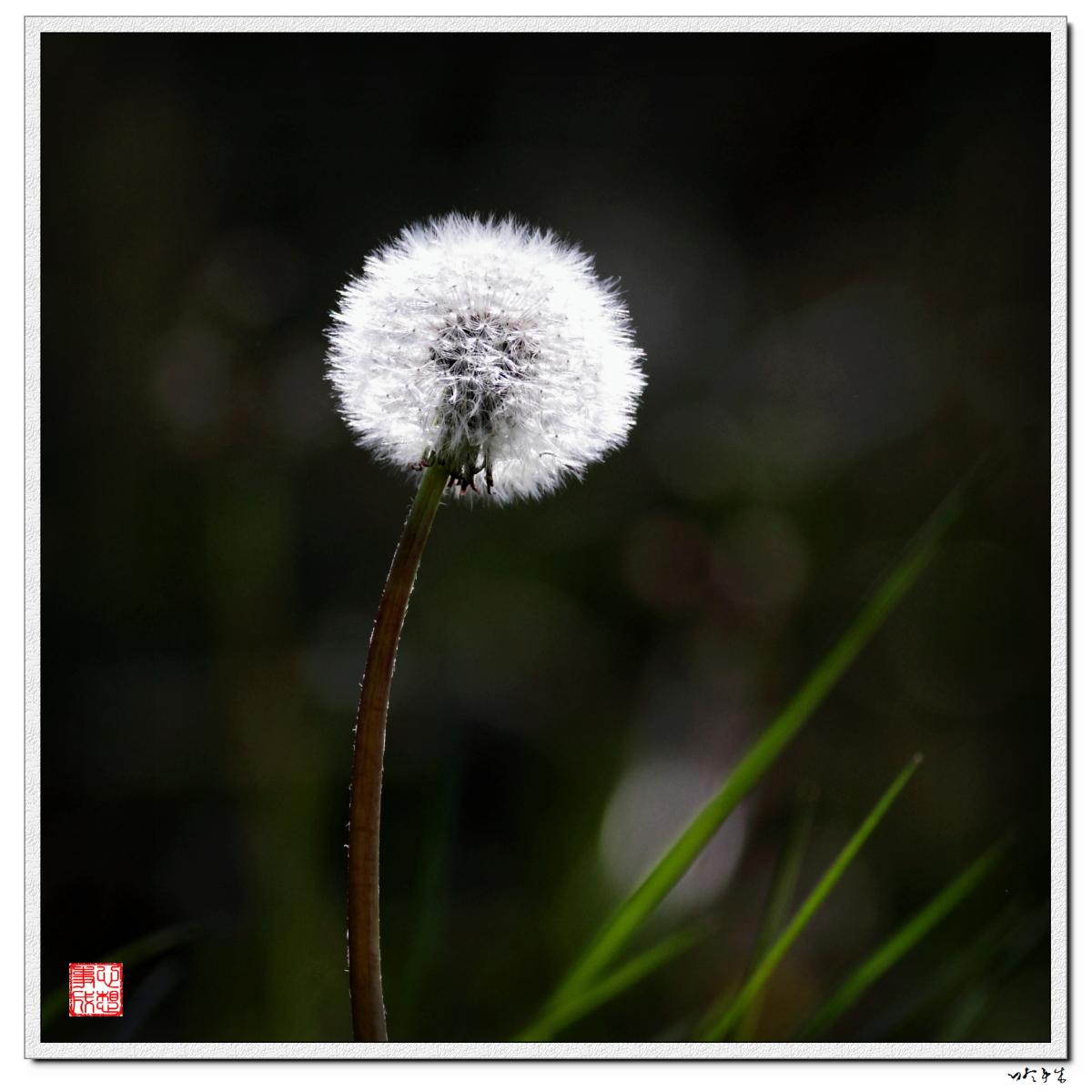 【心想事成】走进春天,感受春意_图1-5