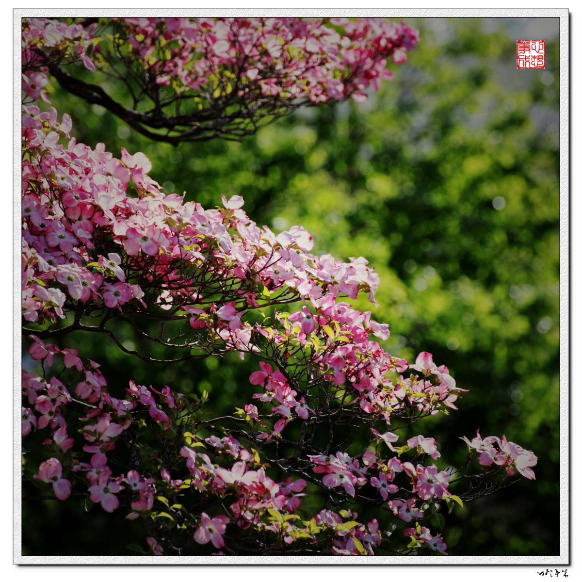 【心想事成】走进春天,感受春意_图1-3