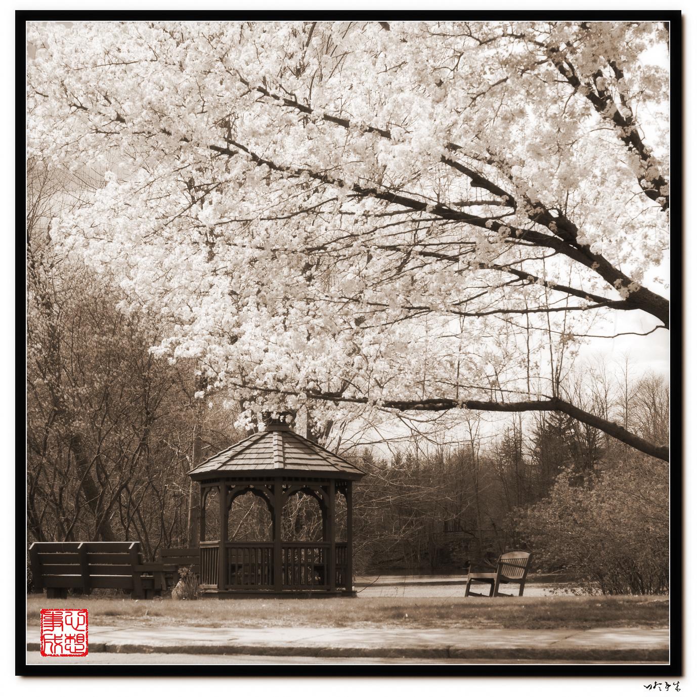 【心想事成】走进春天,感受春意_图1-1