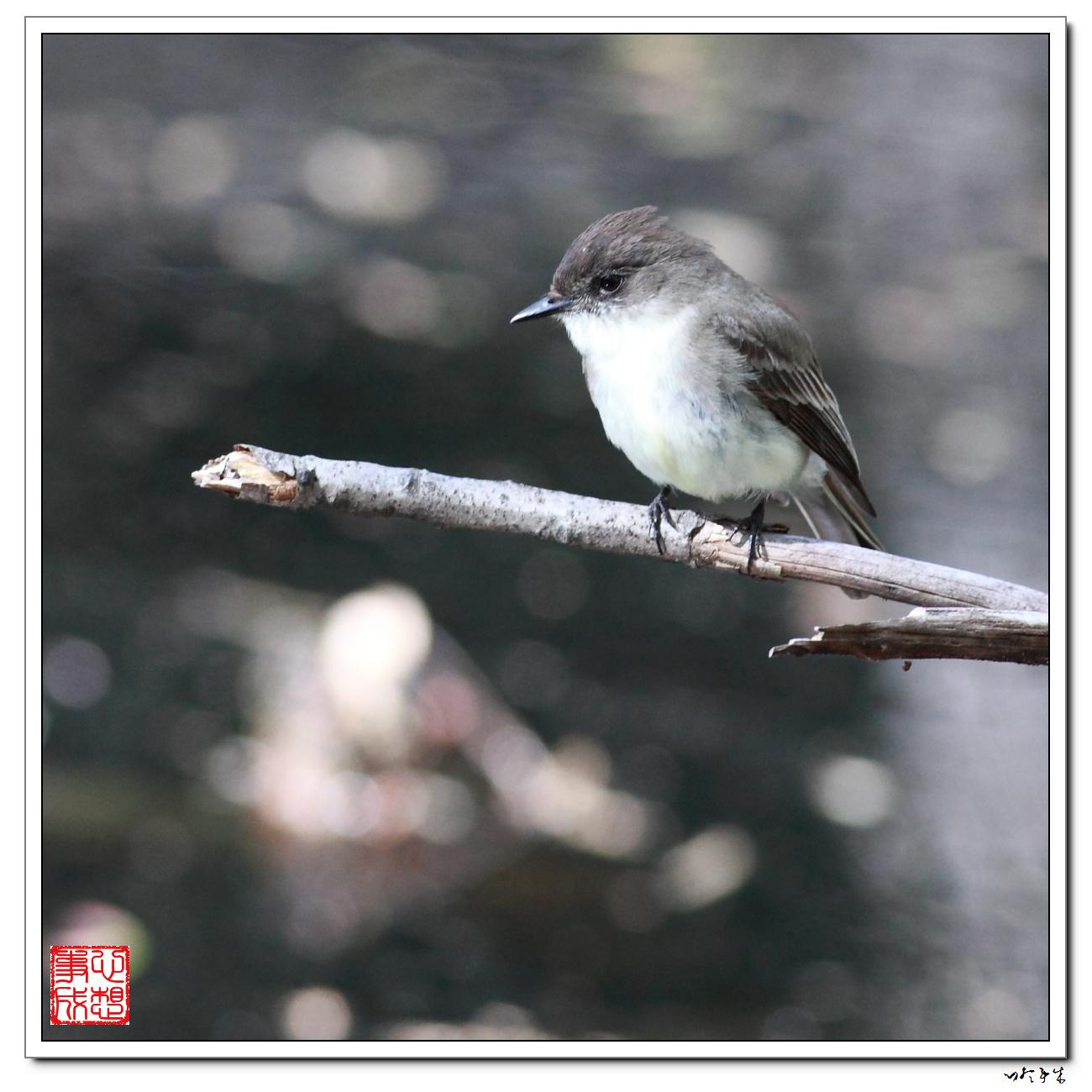 """【心想事成】""""我是一只小鸟""""_图1-11"""