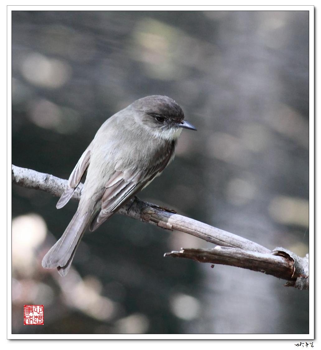 """【心想事成】""""我是一只小鸟""""_图1-10"""