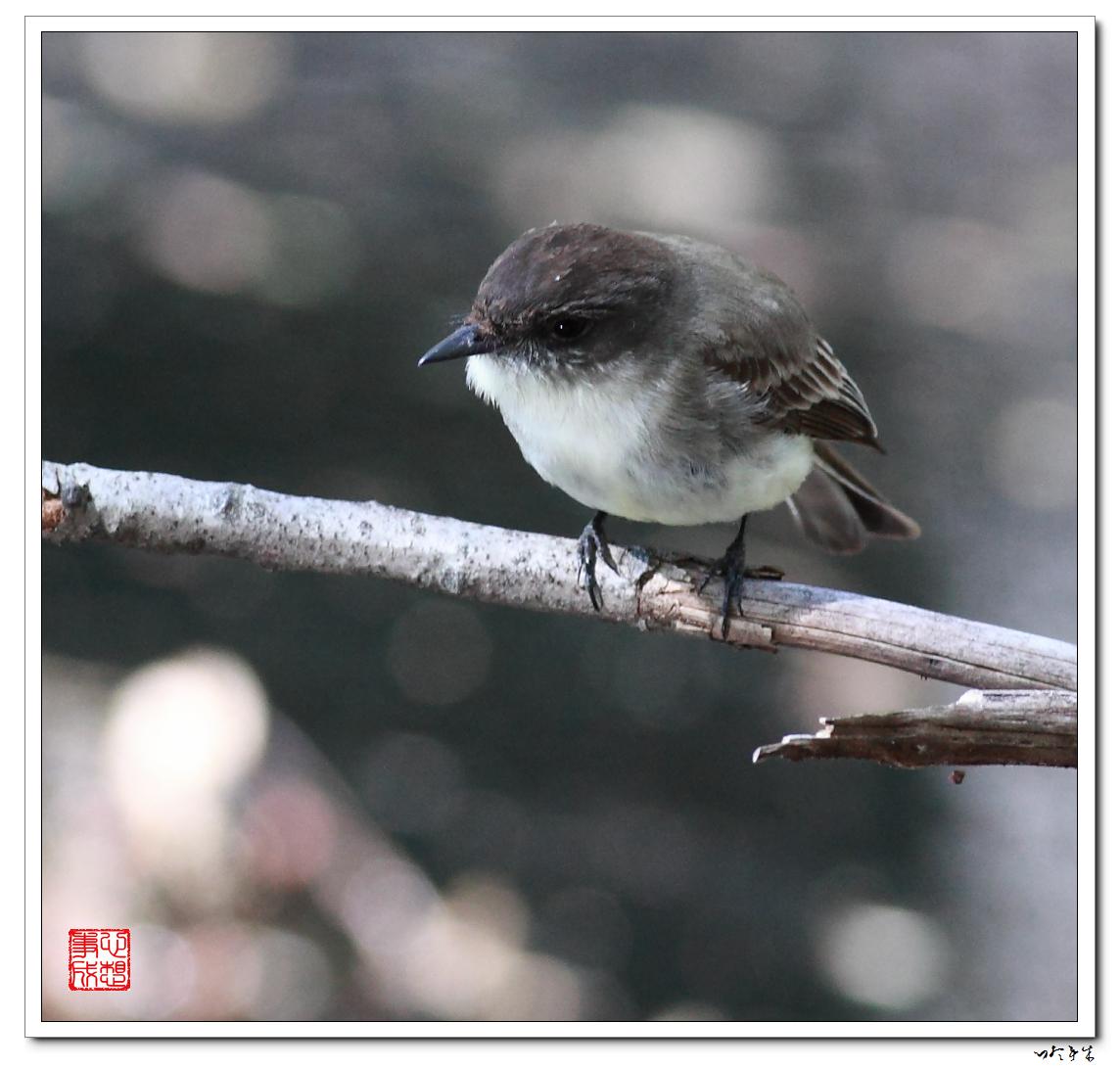 """【心想事成】""""我是一只小鸟""""_图1-9"""