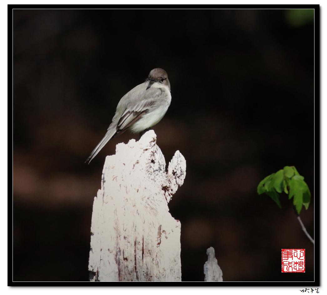 """【心想事成】""""我是一只小鸟""""_图1-8"""