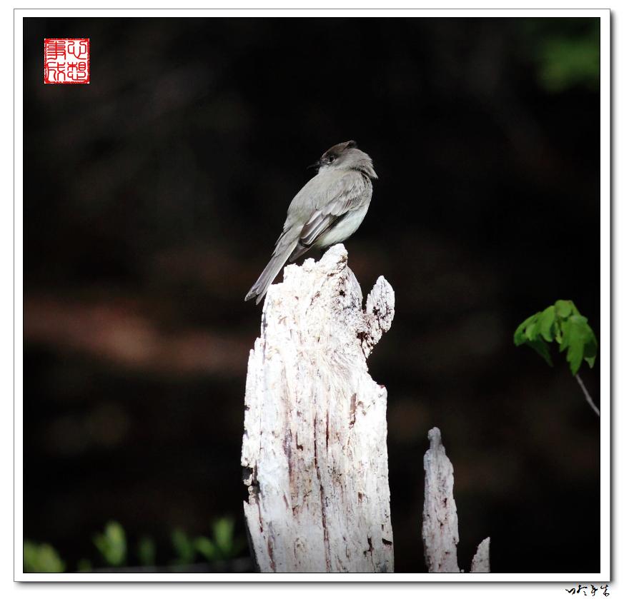 """【心想事成】""""我是一只小鸟""""_图1-7"""