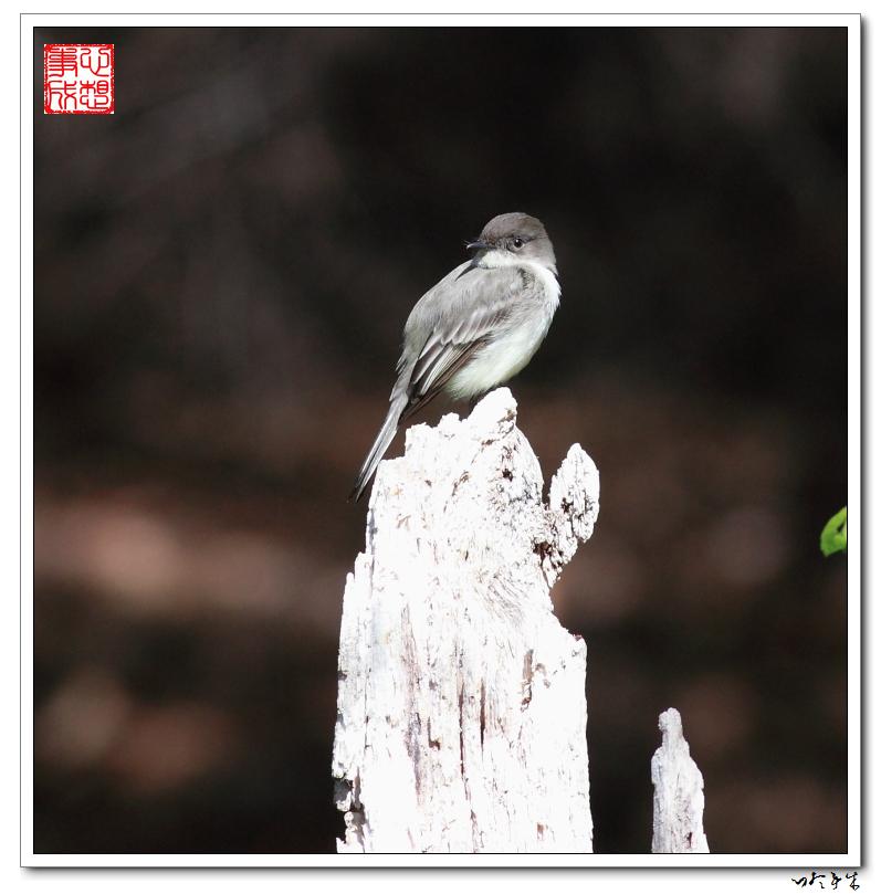 """【心想事成】""""我是一只小鸟""""_图1-6"""
