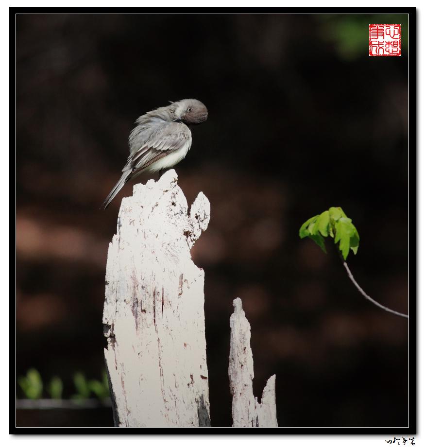 """【心想事成】""""我是一只小鸟""""_图1-5"""