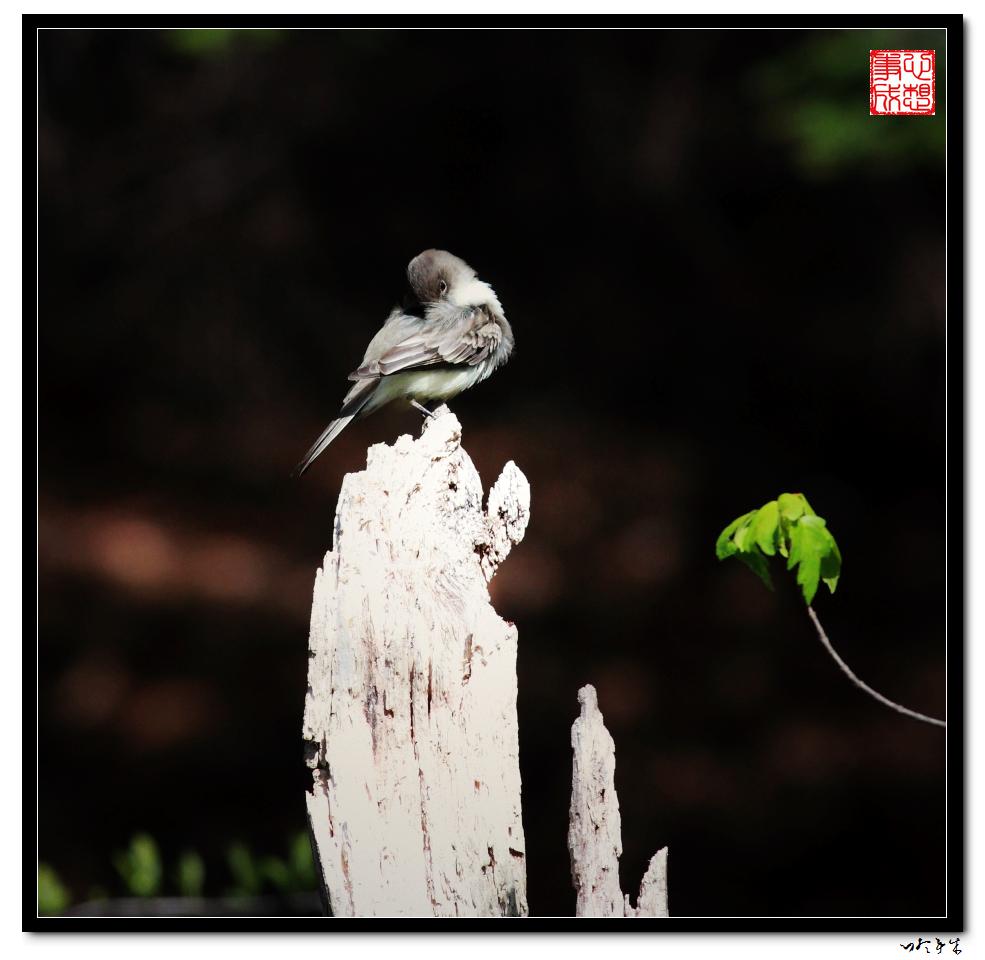 """【心想事成】""""我是一只小鸟""""_图1-4"""