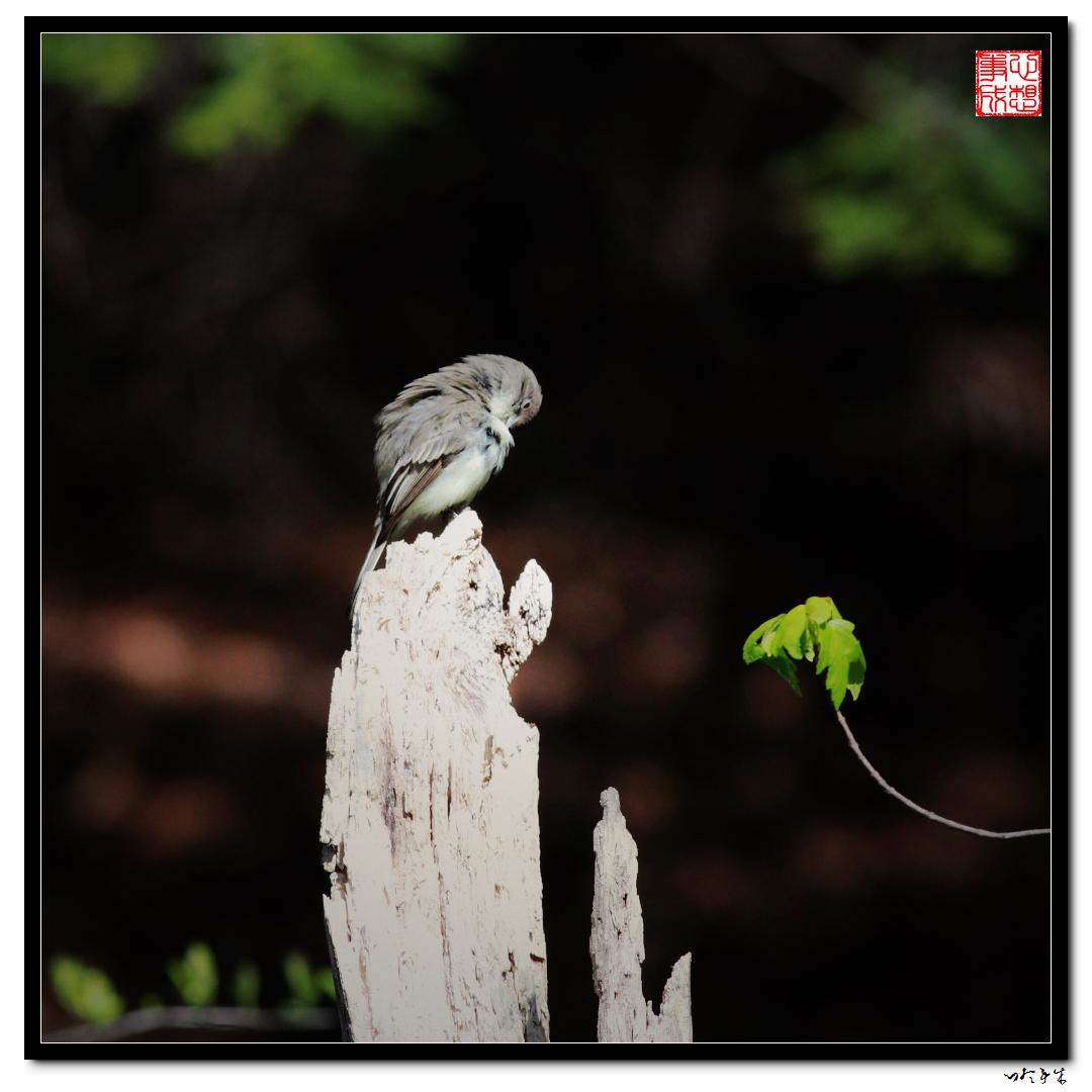 """【心想事成】""""我是一只小鸟""""_图1-3"""
