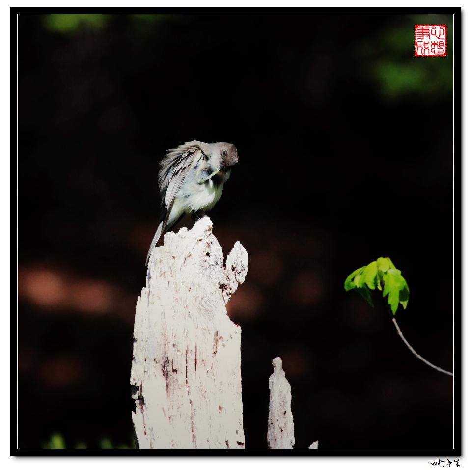 """【心想事成】""""我是一只小鸟""""_图1-2"""
